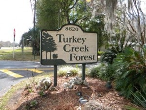 Turkey Creek Forest in Gainesville Fl