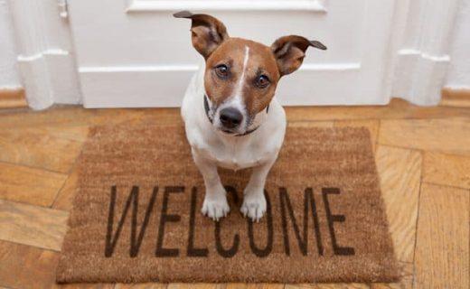 Dog-Friendly House